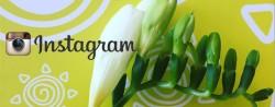 postari pe Instagram… din Sun Plaza